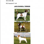 FCI Standard No 345 Jack Russell Terrier
