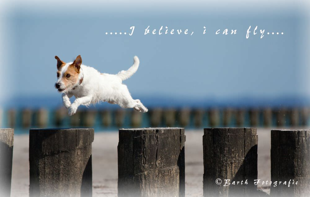 Parson Russell Terrier am Strand